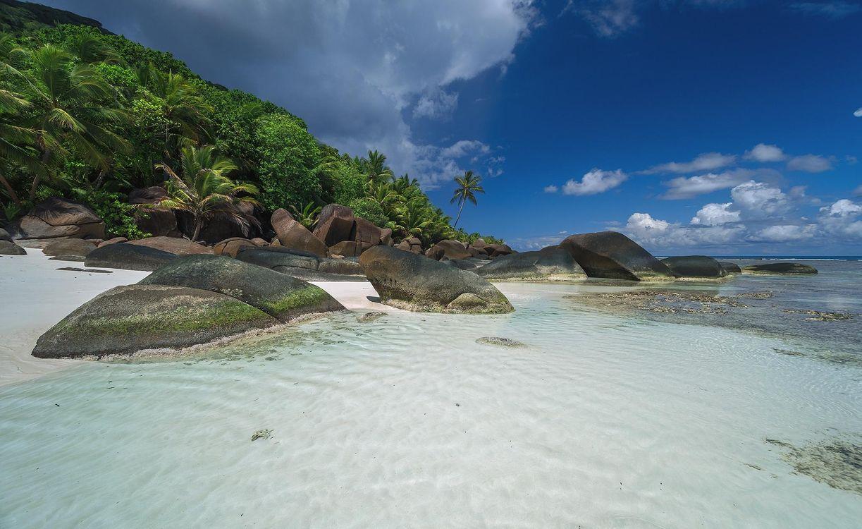 Фото берег Сейшельские острова пальмы - бесплатные картинки на Fonwall