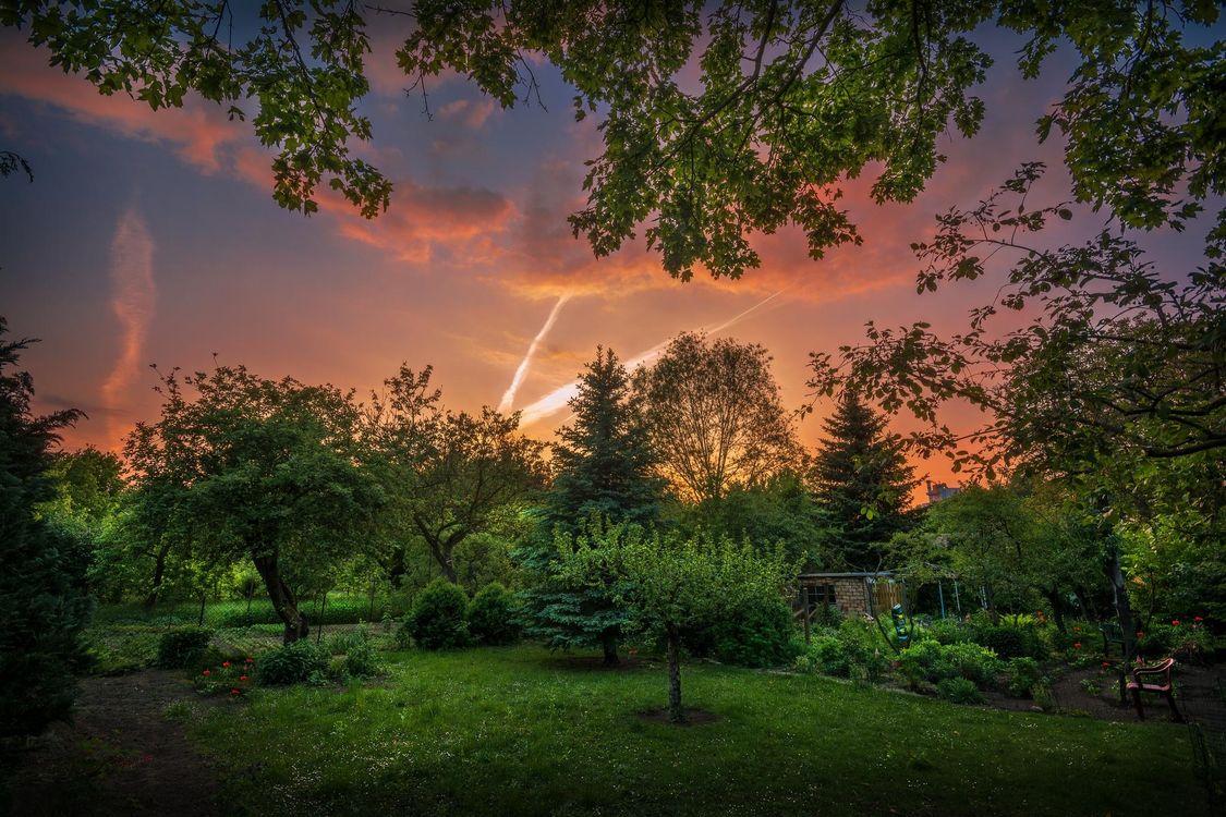 Фото бесплатно закат, поляна, сад, участок, деревья, пейзаж, пейзажи