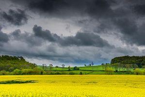 Фото бесплатно деревья, облака, цветы