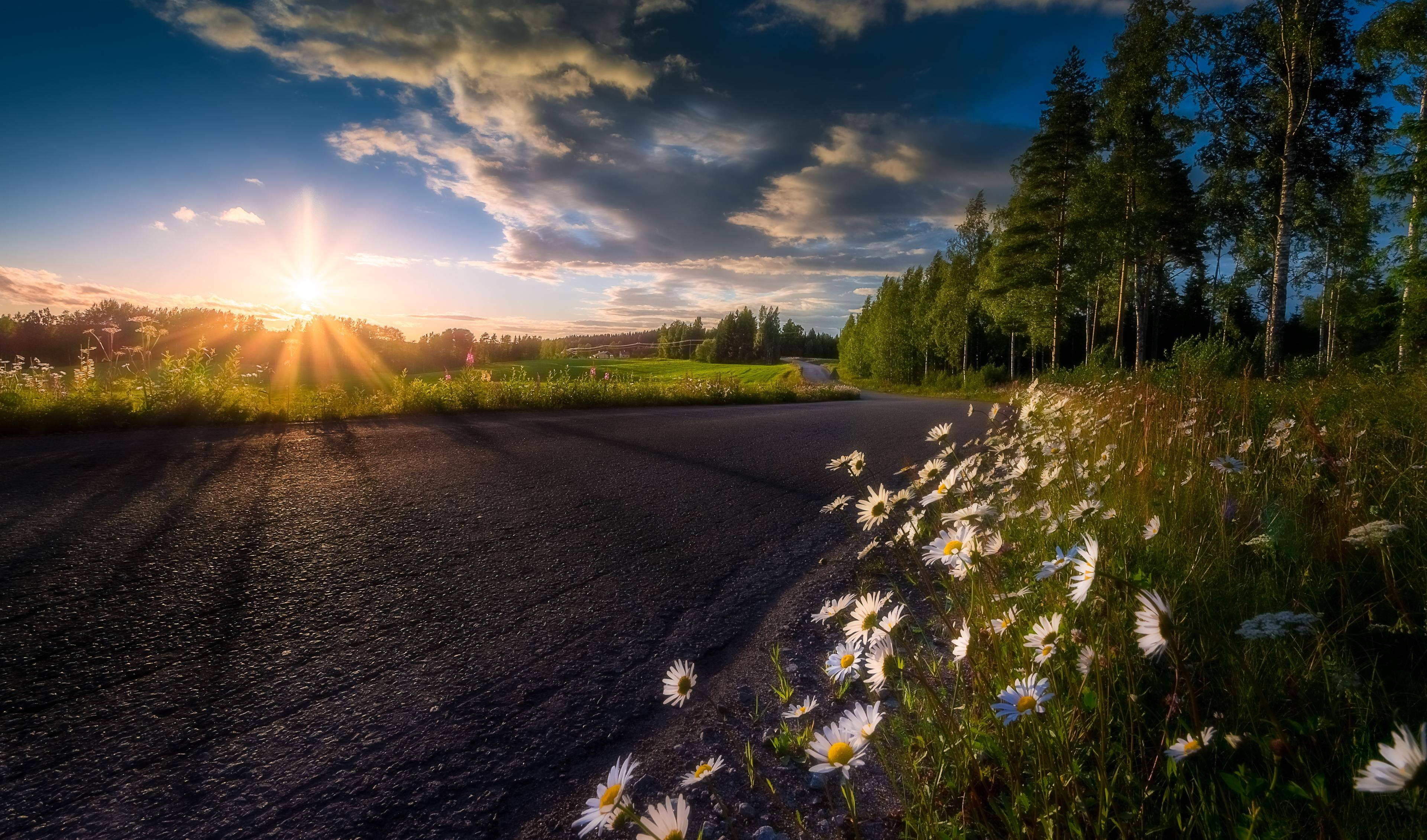 Обои закат, дорога, деревья, цветы