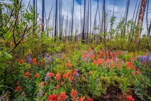 Бесплатные фото лес, деревья, цветы, туман, природа