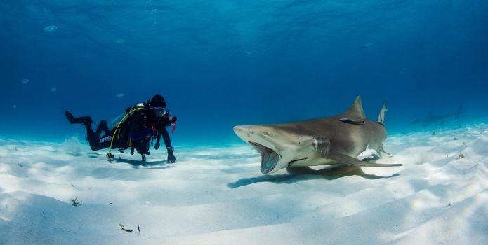 Скачать акулы, морские обитатели картинку