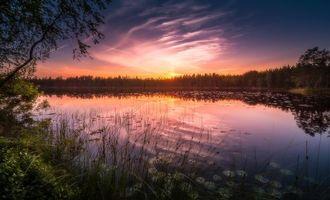 Бесплатные фото закат,озеро,деревья,пейзаж,Финляндия