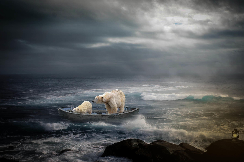 Обои море, скалы, лодка, медведи