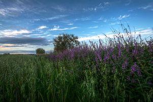 Бесплатные фото поле,цветы,деревья,пейзаж