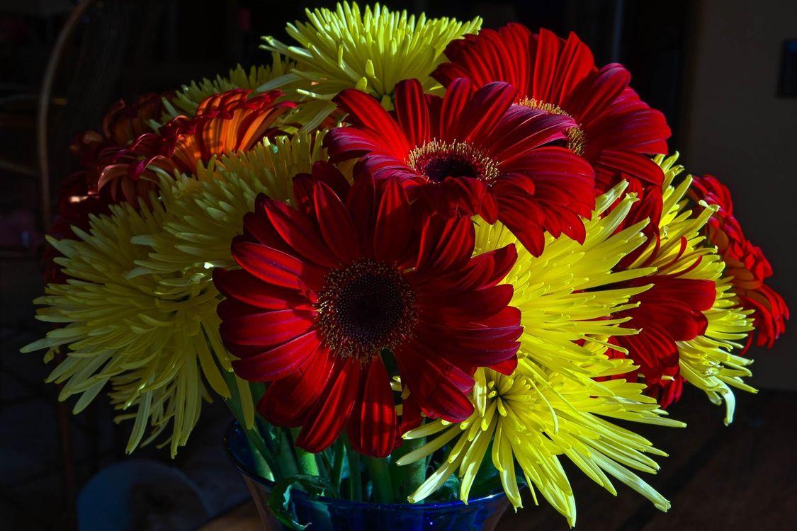 Фото бесплатно красивый букет, цветы, хризантемы, герберы, флора, цветы