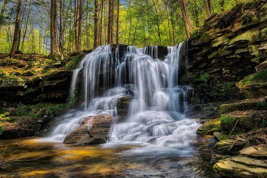 Фото бесплатно Пенсильвания, скалы, Ricketts Glen State Park