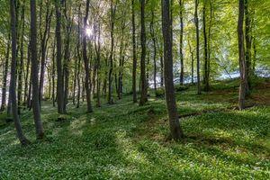 Фото бесплатно лес, деревья, цветы