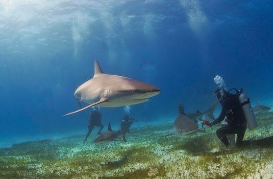 Бесплатно акулы, морские обитатели - фото красивые