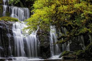 Бесплатные фото Purakanui Falls,New Zealand,South island,водопад,салы,деревья,природа