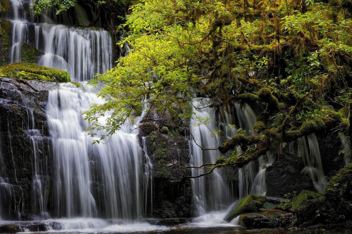 Фото бесплатно Purakanui Falls, New Zealand, South island, водопад, салы, деревья, природа, природа
