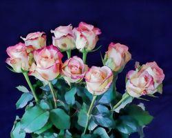 Фото розы, букет онлайн бесплатно