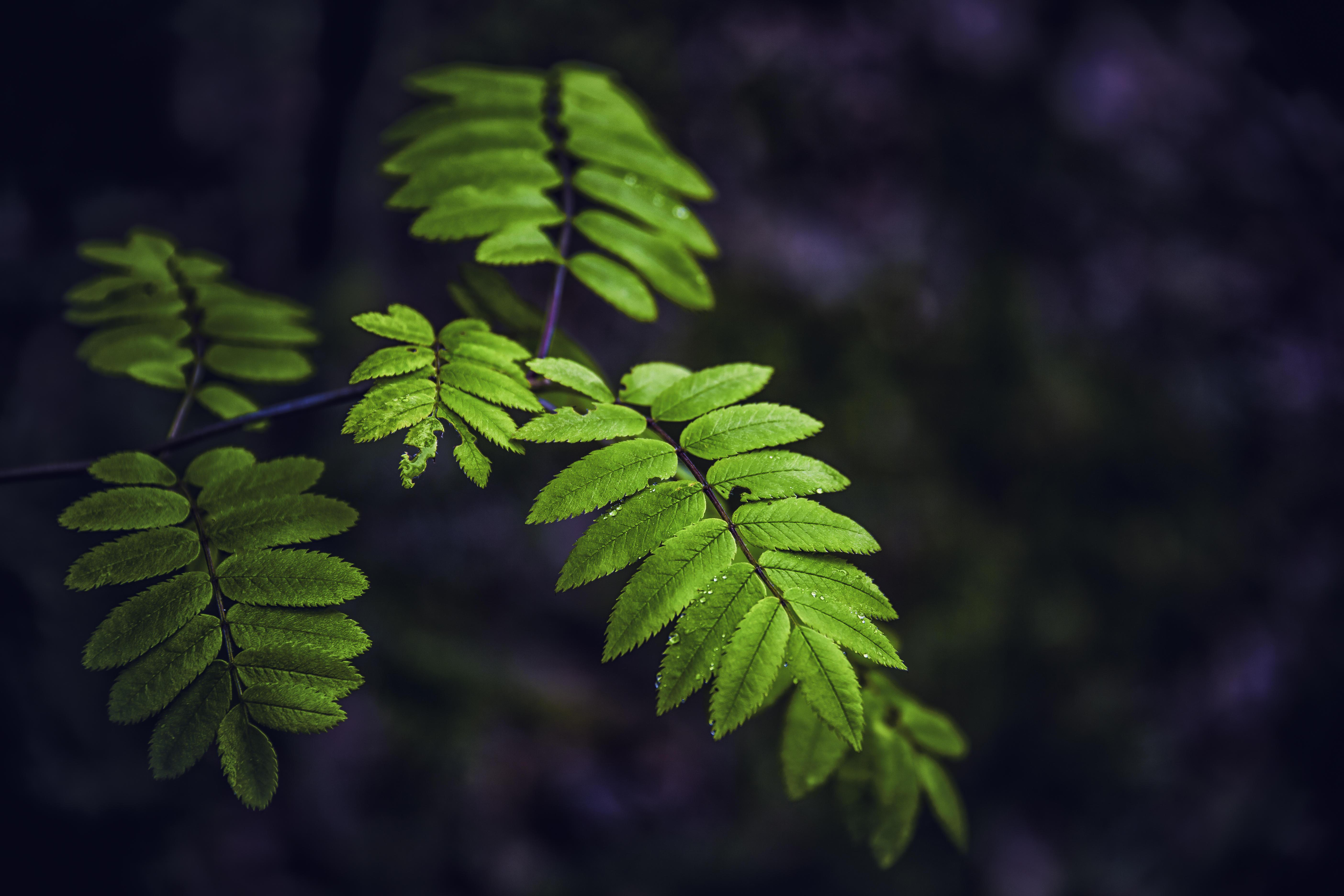 Обои ветка, листья, природа, флора