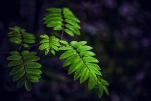 Бесплатные фото ветка,листья,природа,флора