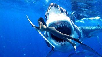 Фото бесплатно девушка, акулы, морские