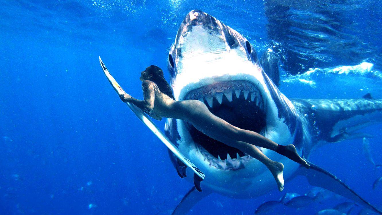 Фото бесплатно Морские обитатели, Акулы, Акула, море, девушка, подводный мир