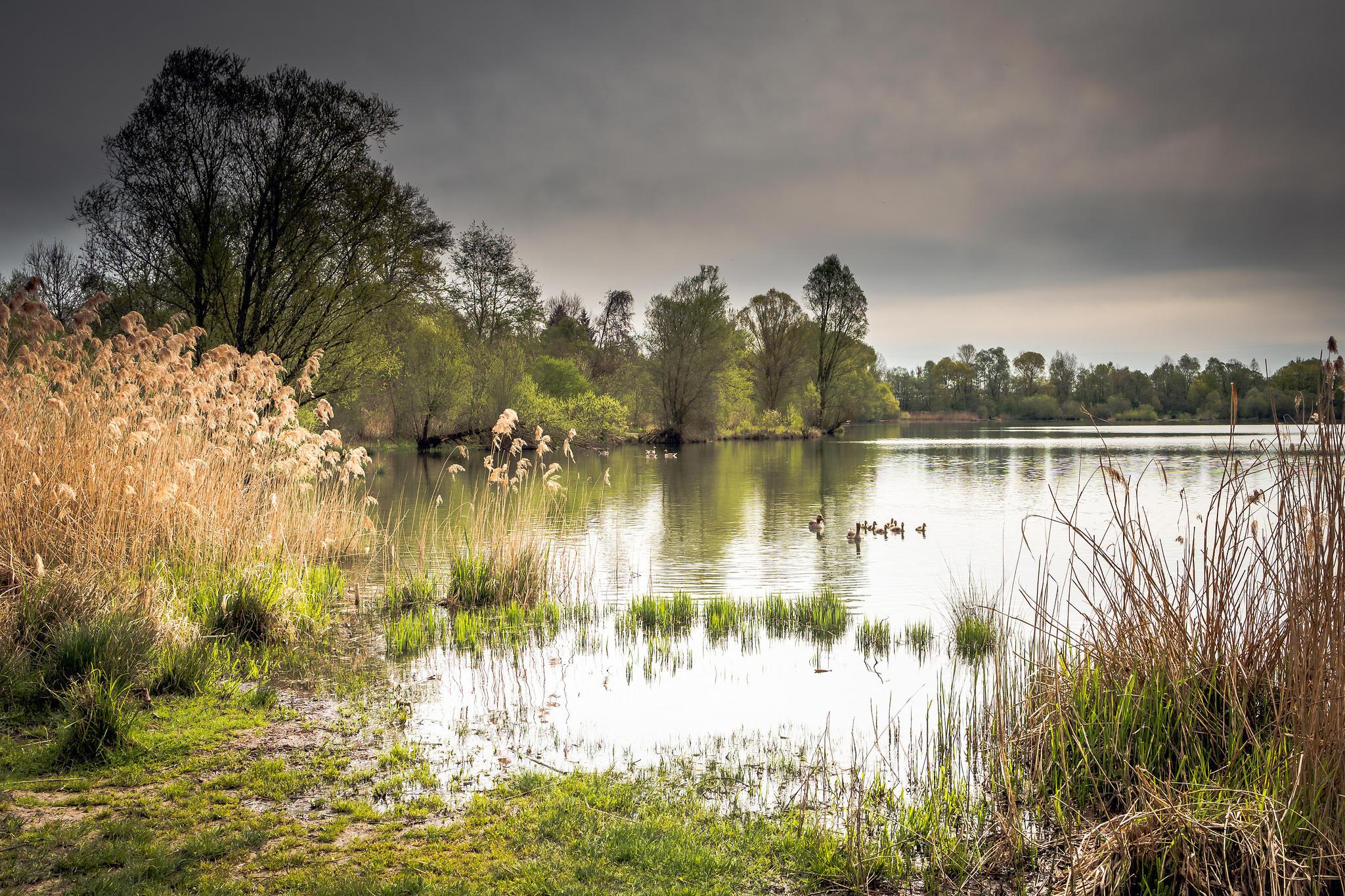 Обои озеро, берег, деревья, пейзаж