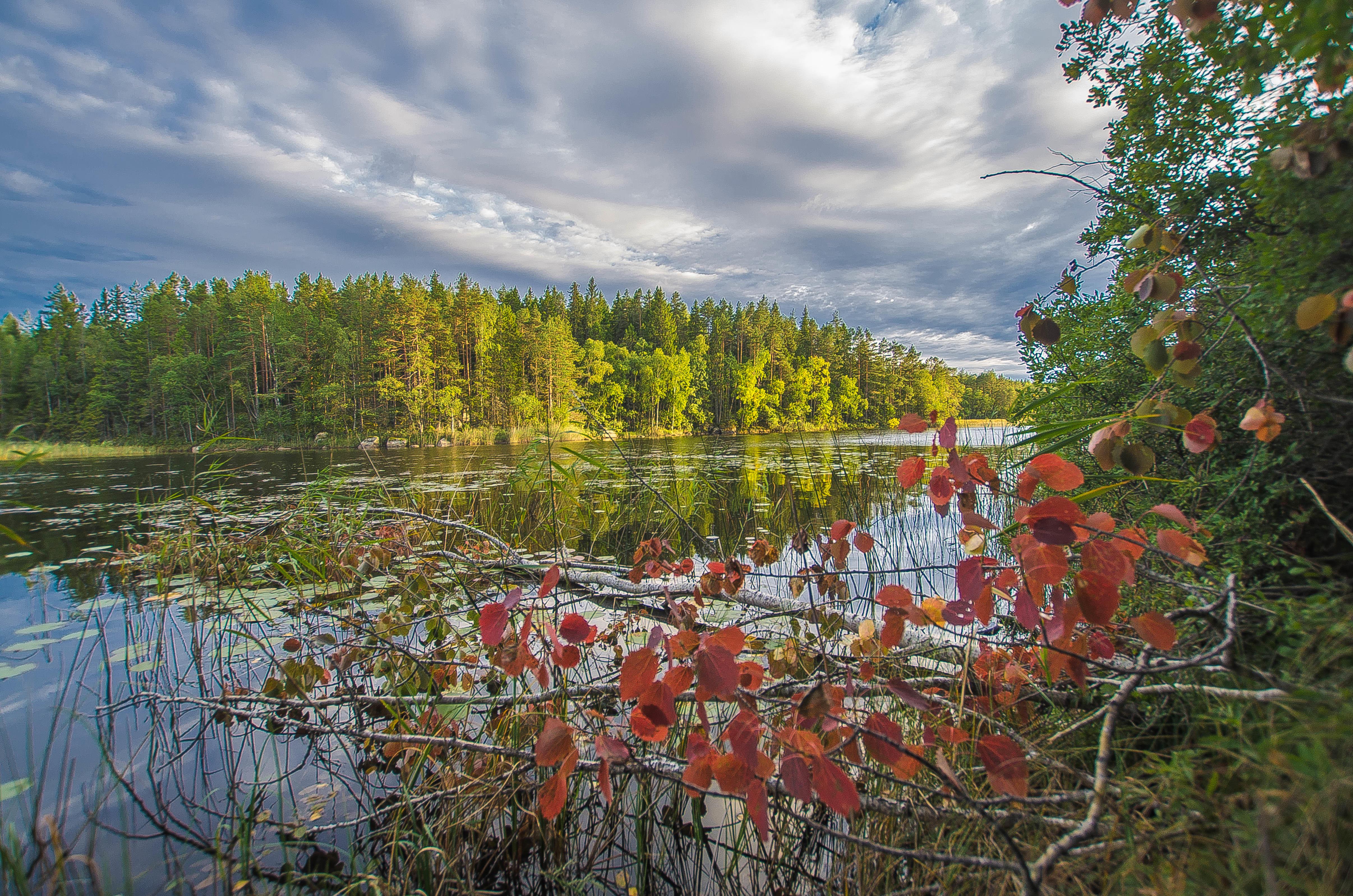 Обои озеро, осень, лес, деревья