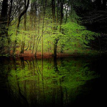 Фото бесплатно деревья, пруд, отражение