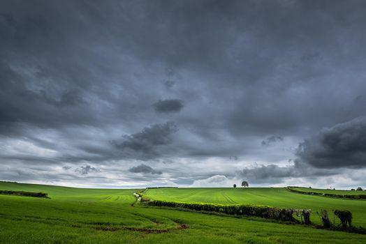 Фото бесплатно облака, деревья, пейзаж