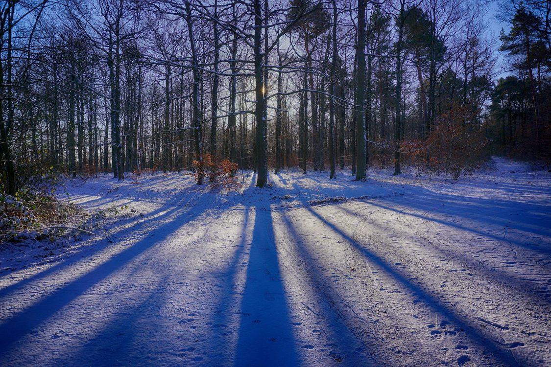 Фото бесплатно зима, лес, дорога, деревья, пейзаж, пейзажи