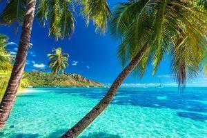 Бесплатные фото солнце,берег,пейзаж,море,пляж,пальмы,отдых