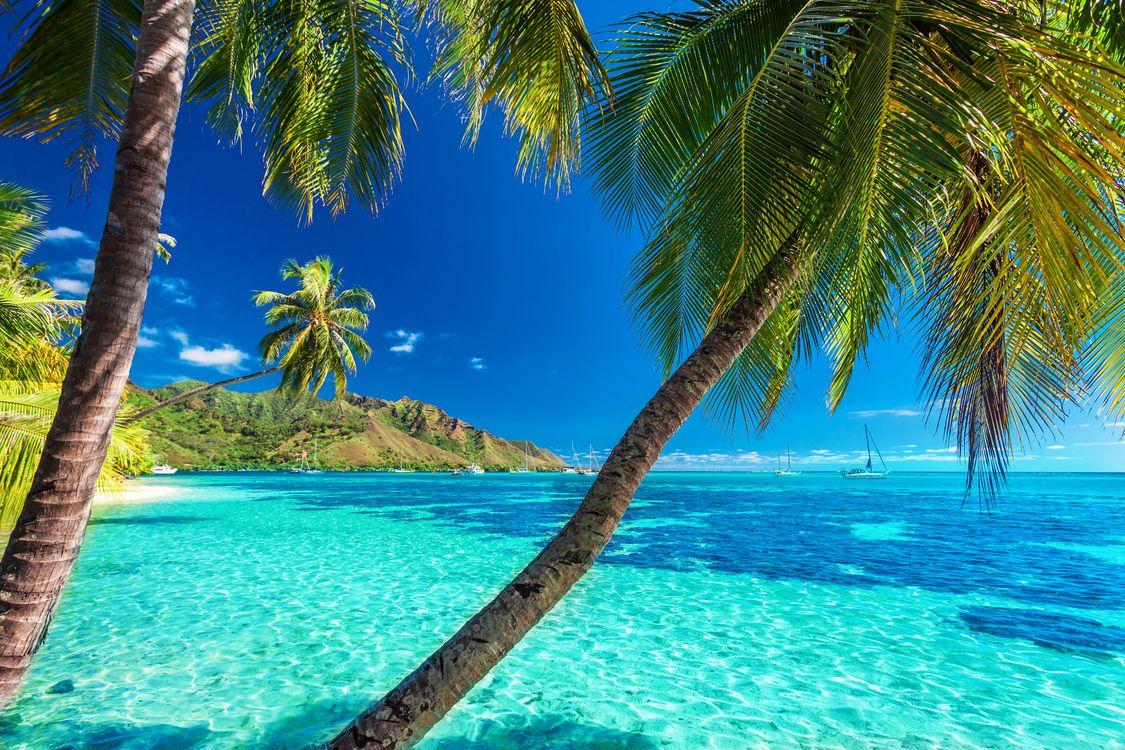 Фото бесплатно солнце, берег, пейзаж, море, пляж, пальмы, отдых, тропики, the sun, shore, landscape, sea, beach, palm trees, stay, пейзажи