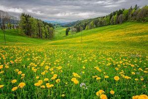 Бесплатные фото поле,холмы,трава,цветы,цветение,деревья,пейзаж