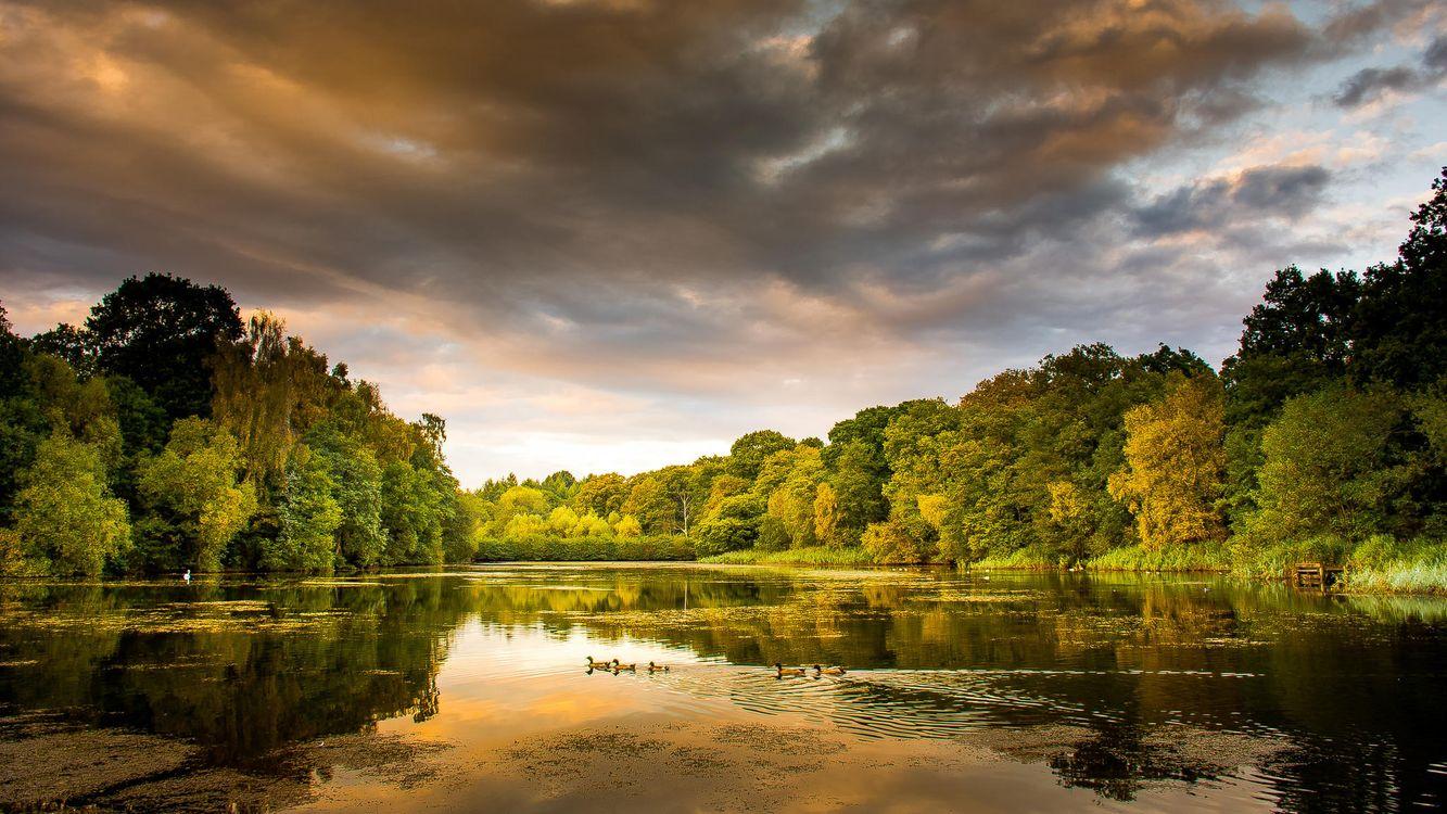 Фото бесплатно осень, озеро, деревья, закат, пейзаж, пейзажи