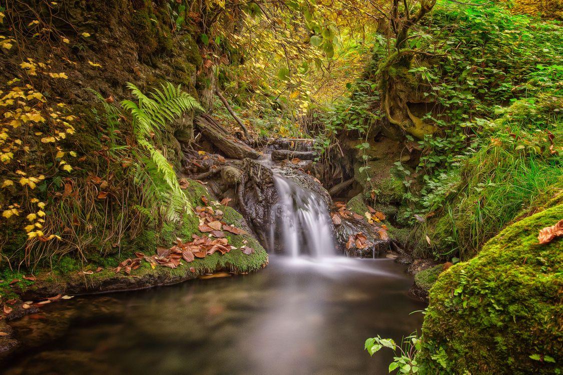 Фото бесплатно осень, лес, деревья, скалы, водопад, природа, природа