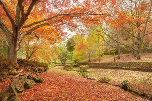 Бесплатные фото парк,осень,деревья,пейзаж