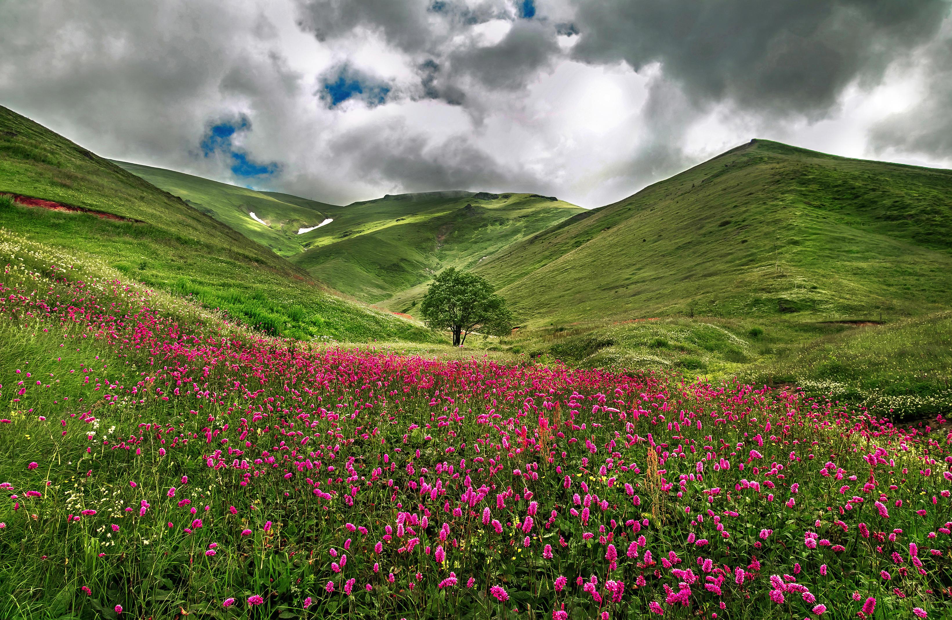 Обои поле, горы, холмы, дерево