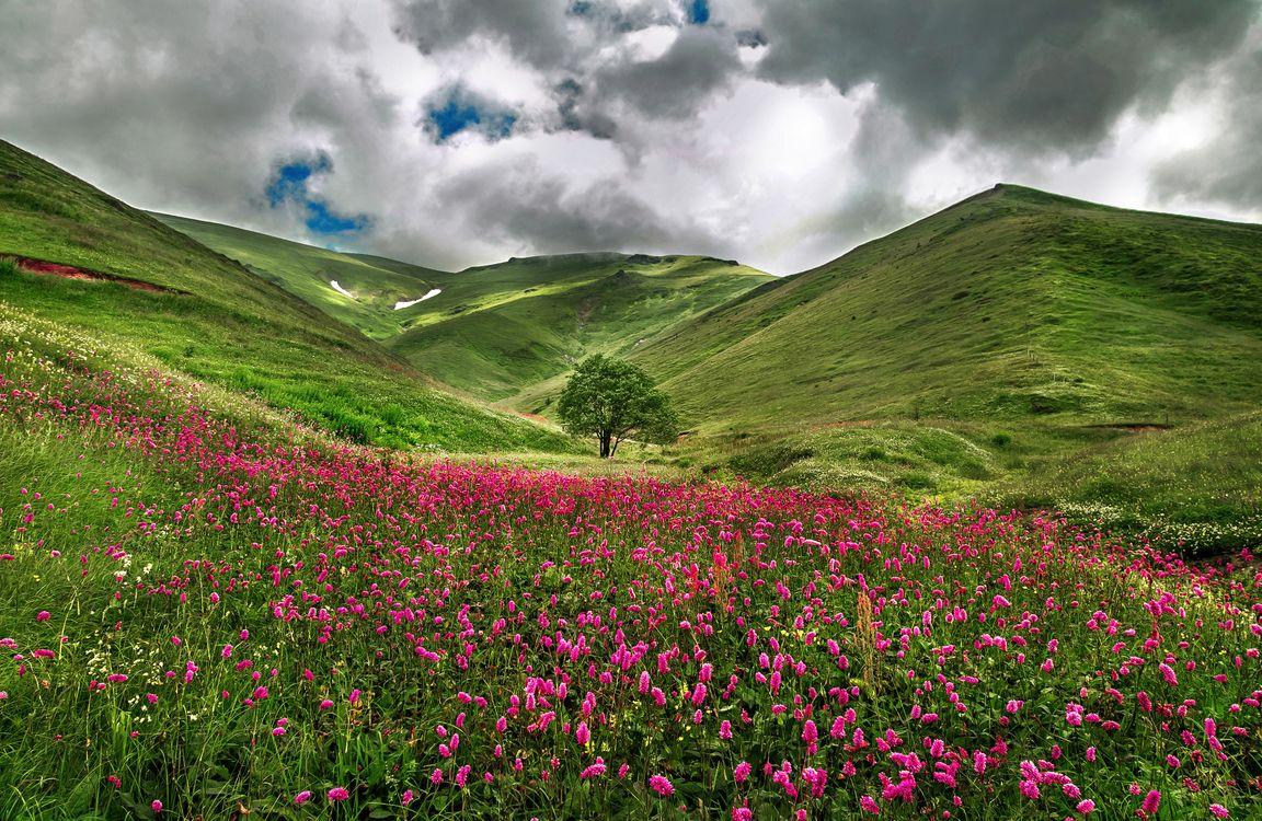 Фото бесплатно поле, горы, холмы, дерево, цветы, небо, облака, пейзаж, пейзажи