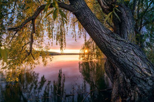 Фото бесплатно закат, река, дерево