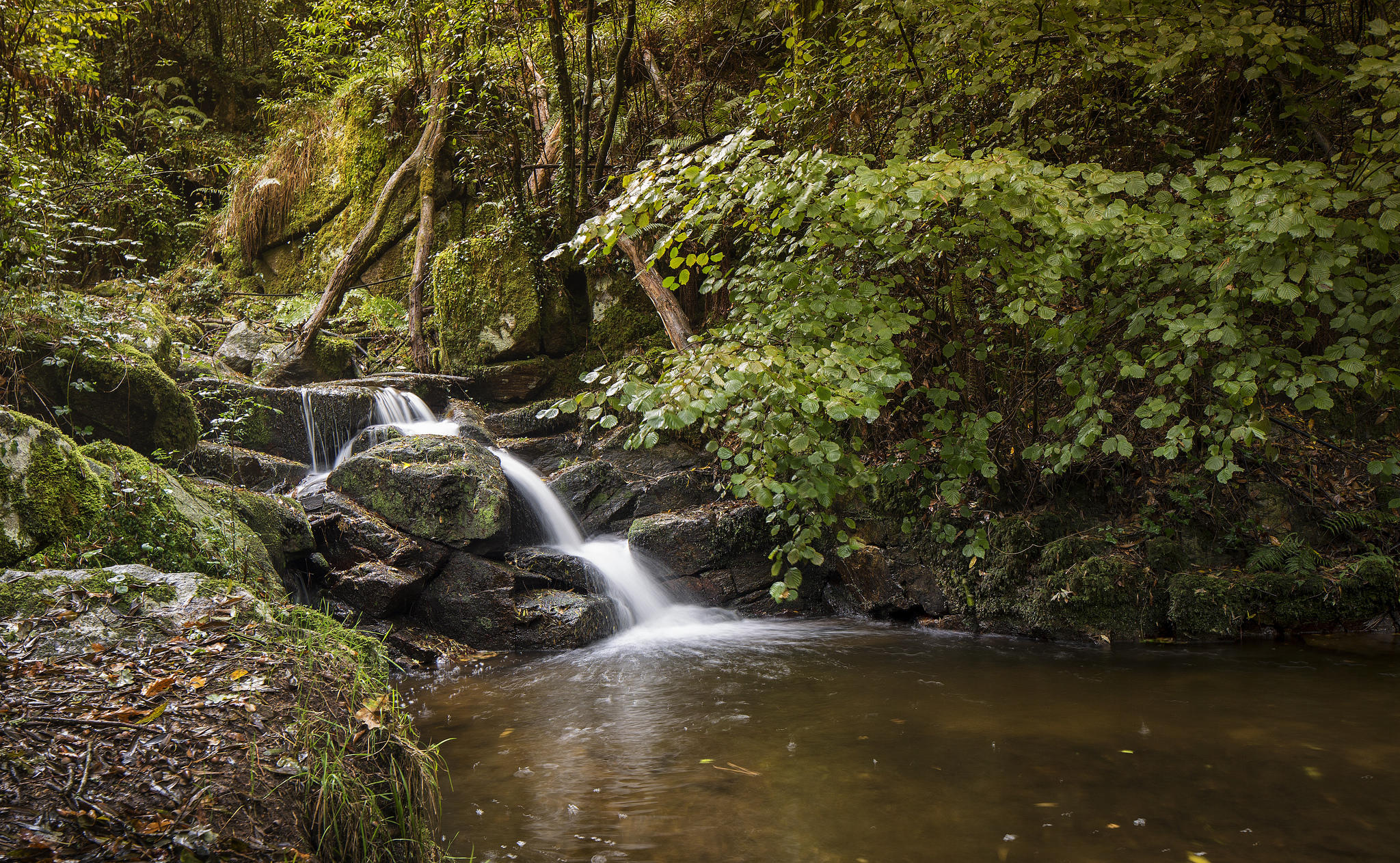 Обои лес, деревья, водопад, природа