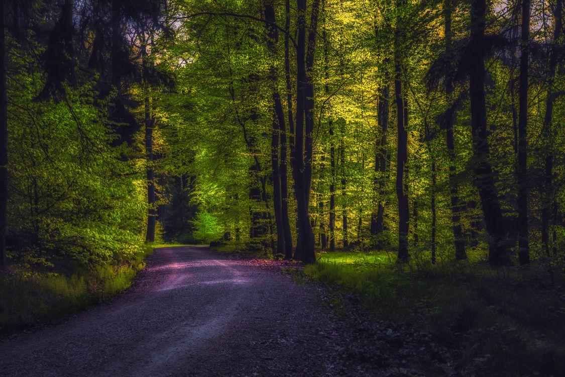 Фото бесплатно лес, деревья, дорога, пейзаж, пейзажи