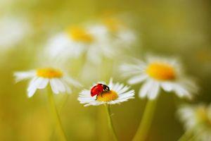 Фото онлайн бесплатно божья коровка, цветок