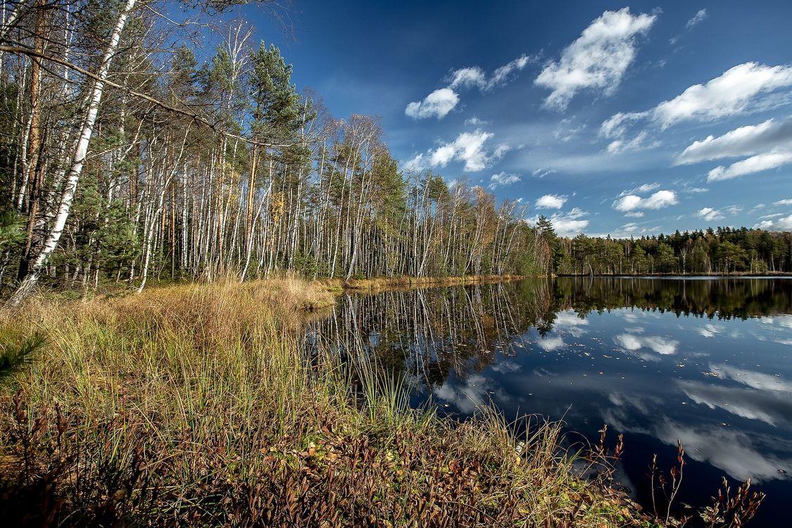 Фото бесплатно Черное озеро, Московская область, Россия, пейзажи