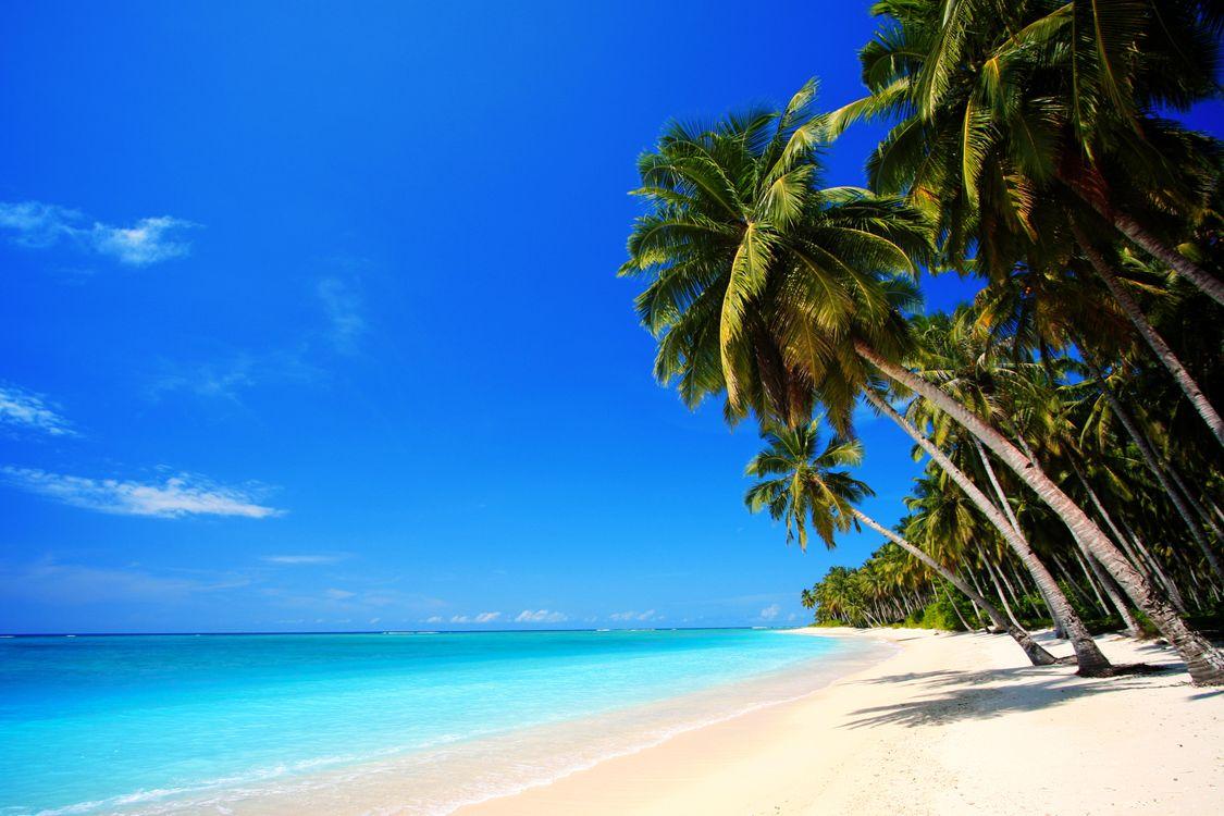 Фото бесплатно тропики, море, пляж, пальмы, песок, отдых, пейзажи