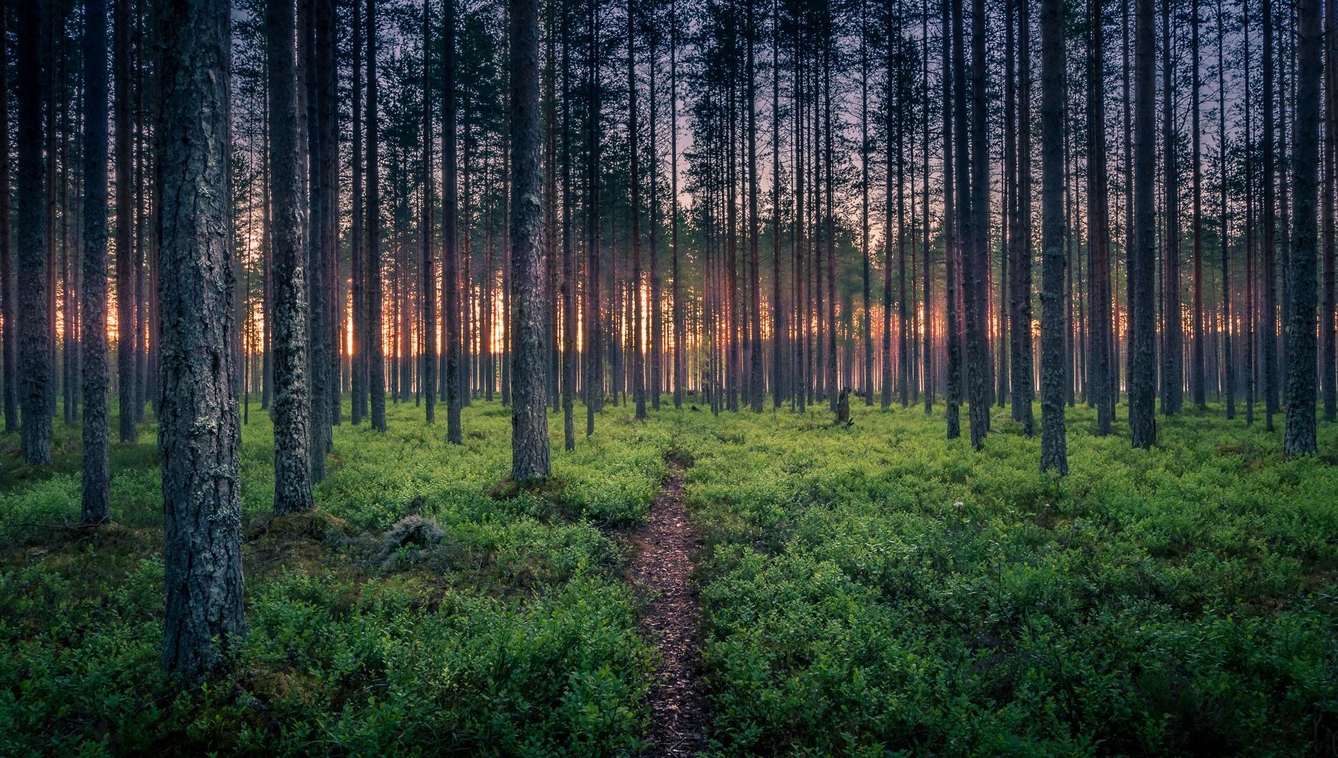 Обои лес, деревья, тропинка, пейзаж