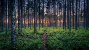 Бесплатные фото лес, деревья, тропинка, пейзаж