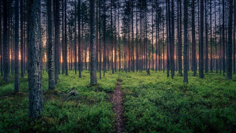 Картинка лес, деревья, тропинка, пейзаж на рабочий стол. Скачать фото обои пейзажи