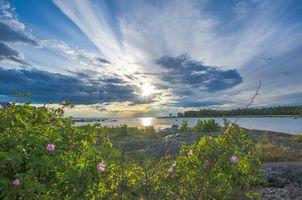 Бесплатные фото закат, река, небо, берег, кустарник, пейзаж