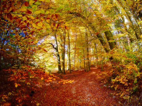 Photo free road through the forest, autumn, forest