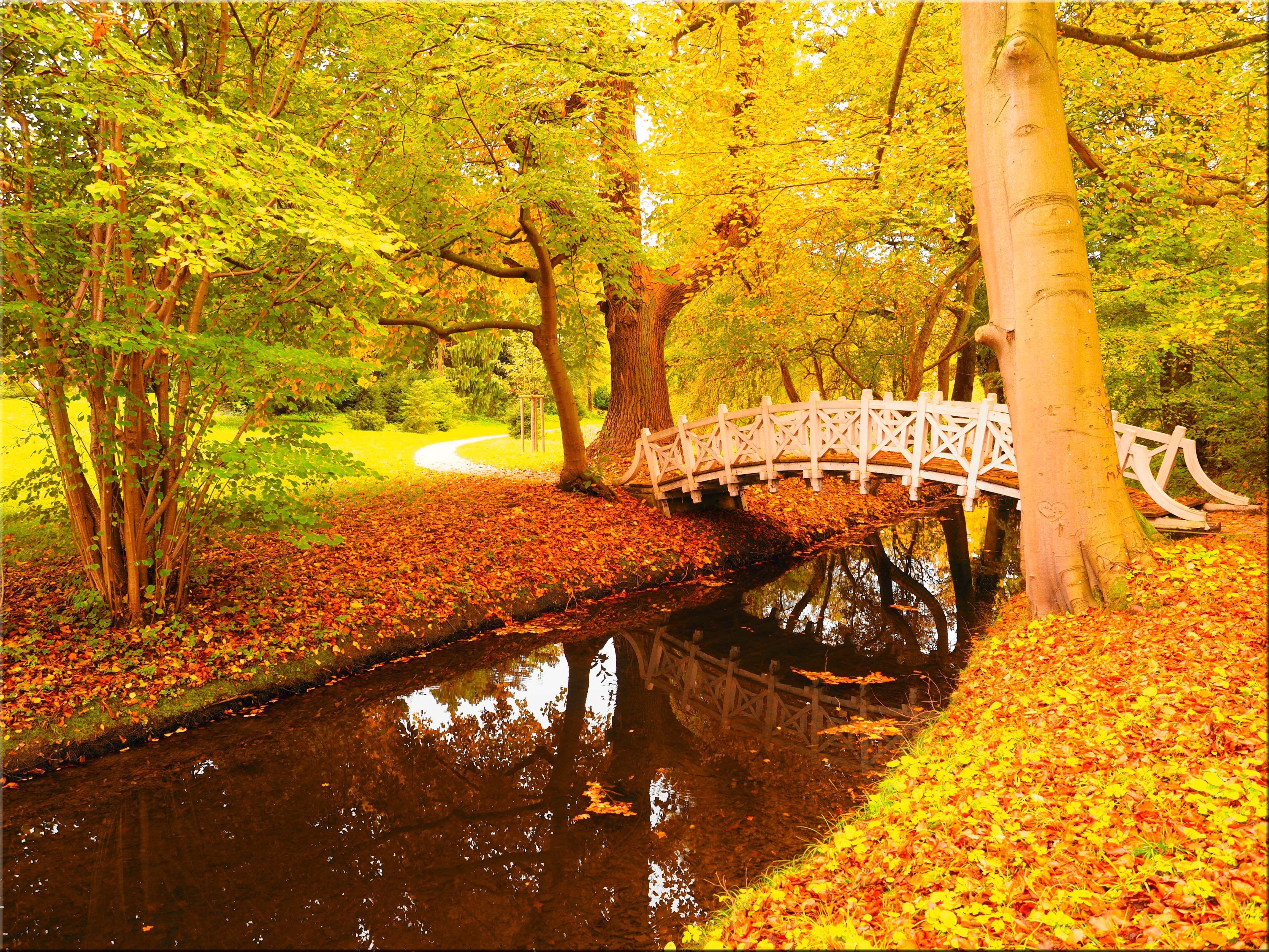 Обои осень, парк, деревья, мост