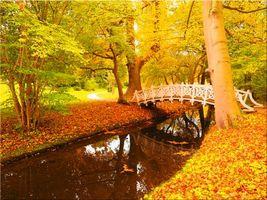 Бесплатные фото осень,парк,деревья,мост,водоём,пейзаж