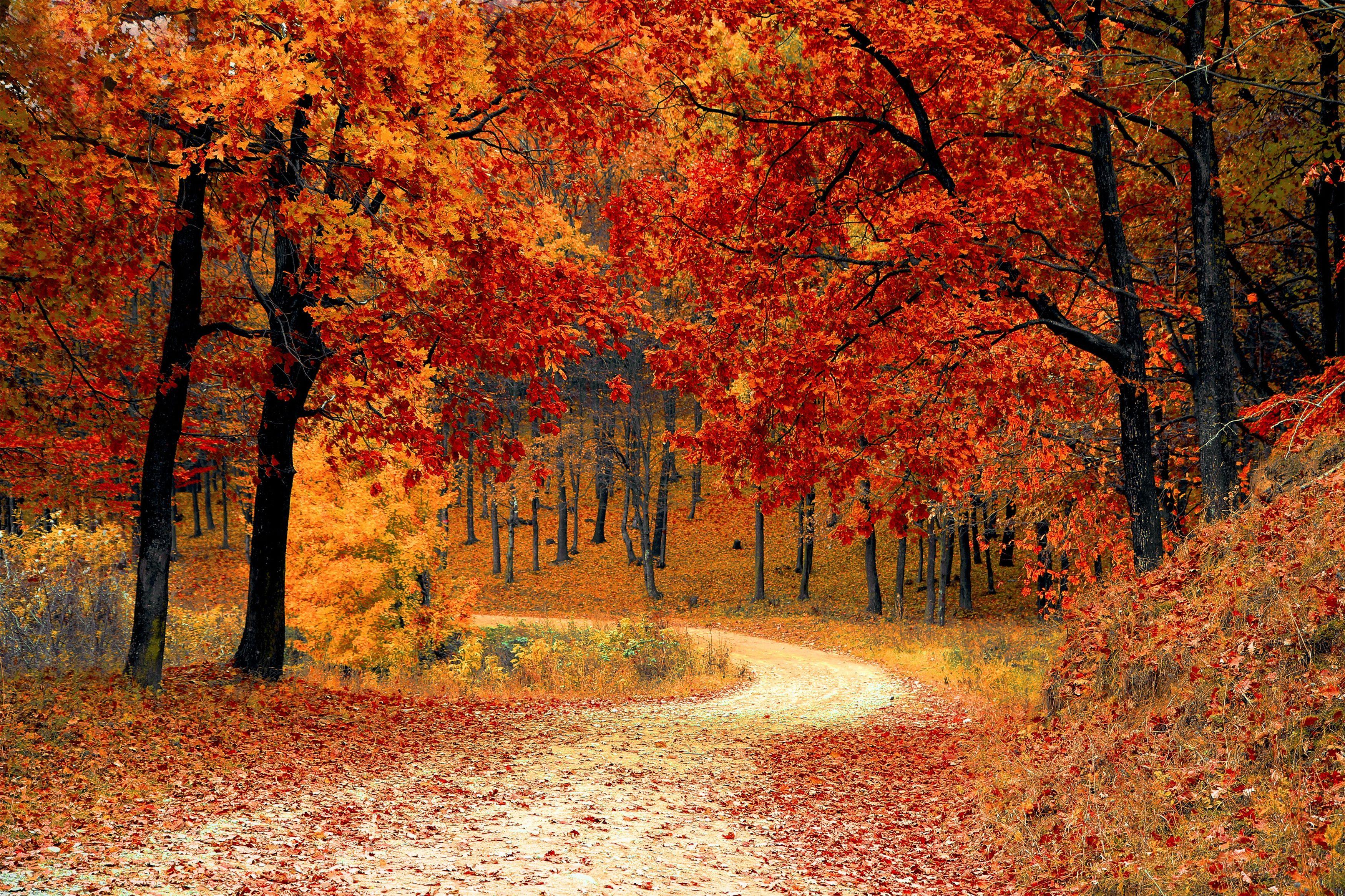 Обои осенняя дорожка, осень, лес, дорога