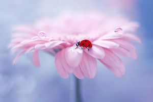 Photos free flower, ladybug and without registration