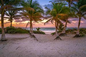 Фото бесплатно Восход, закат, пальмы
