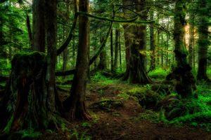 Бесплатные фото закат,лес,деревья,припрода